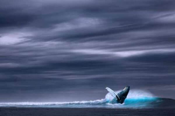 Bitcoin halving: Are Whales done Hodling?