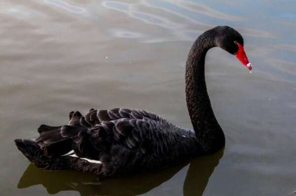 US Intelligence Officials Are Funding Research on Dollar-Crushing 'Black Swan' Events